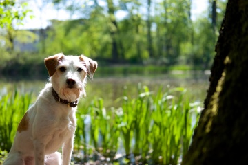 Holly vor dem Kaudiek-Teich